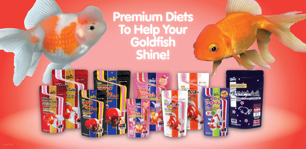 HIkari Gold Fish Products