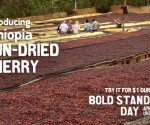 dunn bros coffee bold standard day