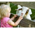 Half Off Admission to *NEW* Twin Cities Spring Babies Festival – $5/Person