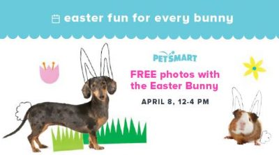 Free Photos with the Easter Bunny at PetSmart – Saturday, April 8th