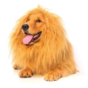Amazon: Cutest Lion Mane Costume For Your Dog on Sale for $10.99