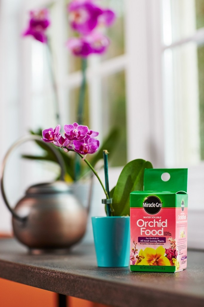 Grow The Most Beautiful And Healthy Flowers Now In Your Garden Head Over To For This Blooming Deal