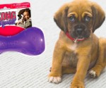 Amazon: KONG Squeezz Ball Dog Toy Only $3.32 (Ships w/ $25 Order)